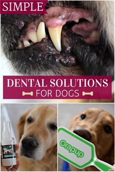 Do you have trouble brushing your dogs teeth? Check out this article for some easier ways to keep their mouth healthy and breath fresh!