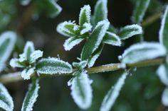 Frostiger Zauber 1
