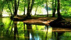Arroyo en un bosque Wallpaper