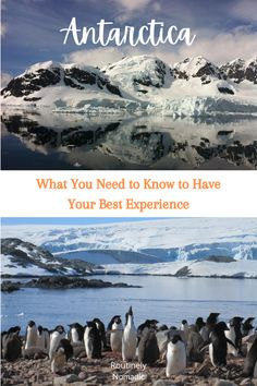 All the details on what to expect on your Antarctica cruise! What the day to day looks like, tips for what to pack, what you will see and do, travel photography, best time to visit Antarctica, the Drake Passage, camping on Antarctica continent, when to start planning and more! Discover the 7th Continent! Antarctica Cruise, Drake Passage, Penguin Bird, 7 Continents, Top Destinations, What To Pack, Things To Do, Travel Photography, Traveling