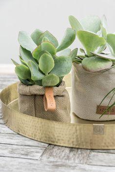 living room ideas – New Ideas Jade Succulent, Succulent Seeds, Interior Styling, Interior Decorating, Interior Design, Contemporary Garden Rooms, Corner Garden, Plant Decor, Home Living Room