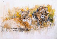 Löwenpaar-Bodo Meier