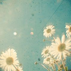 cute hipster vintage wonderful old flowers polaroid vintageciggies ...