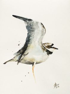 Buy Little Ringed Plover (Charadrius dubius), Watercolour by Andrzej Rabiega on Artfinder. Discover thousands of other original paintings, prints, sculptures and photography from independent artists.