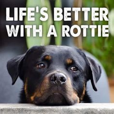 Yes it is! Life is truly better with a rottweiler!