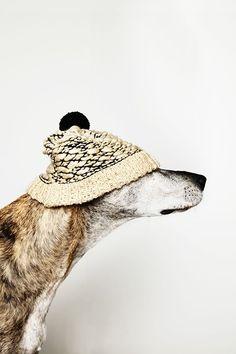 Beardbrand: Winter-ready greyhound.