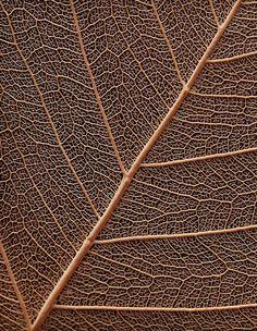 gold rose with texture Texture Photography, Macro Photography, Patterns In Nature, Textures Patterns, Wabi Sabi, Organic Structure, Ceiling Texture, Brown Aesthetic, Fotografia Macro