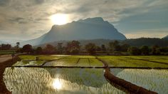 scenic wallpapers, rice wallpapers, field wallpapers, mountains wallpapers, dusk wallpapers, sunset wallpapers, clouds wallpapers, asia wallpapers, china wallpapers