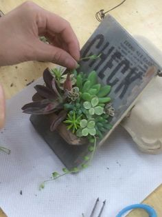 クリックすると元のサイズで表示します Succulent Gifts, Succulent Gardening, Succulent Terrarium, Planting Succulents, Garden Plants, Air Plants, Cactus Planta, Cactus Y Suculentas, Cool Succulents