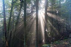 'Sonnenlicht trifft Spinnweben im Wald' von Ronald Nickel bei artflakes.com als Poster oder Kunstdruck $6.48