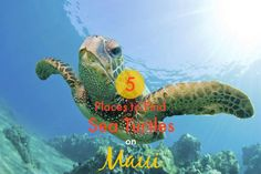 5 Places to Find Sea Turtles in Maui