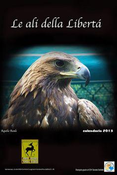 Aquila Reale by Centro Recupero Animali Selvatici, via Flickr