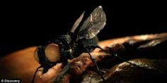 Dhimbje koke dhe zëra, zbulon insekte brenda veshit  http://www.top-channel.tv/artikull.php?id=260656=onews