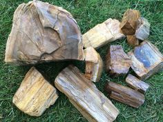 Dig for petrified wood at Holleywood Ranch in Oregon. Rockhounding is the perfect activity to share with your kids of all ages. Fossilized Wood, Petrified Wood, Gold Hill, Rock Hunting, Wood Stone, Wet Look, Looks Cool, Rocks And Minerals, Beautiful World