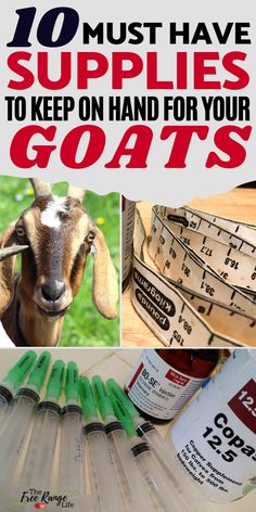 When it comes to raising goats you always need to be prepared! Here are some of the top goat care supplies you should keep on hand at all times so you have them in case of emergency. If you a beginner when it comes to raising goats be sure your supply cabinet has these 10 items! Goat Care, Raising Goats, Nigerian Dwarf, Goat Farming, Baby Goats, In Case Of Emergency, Hobby Farms, Free Range, Livestock