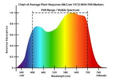 What is a full spectrum LED grow light, and which of the many options are best? In this article we answer both questions for you, so give it a read. Aquaponics Diy, Hydroponics System, Hydroponic Gardening, Indoor Gardening, Hydroponic Equipment, Hydroponic Supplies, Nature Aquarium, Planted Aquarium, Metal Halide Grow Lights