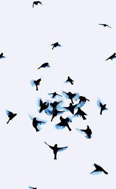 bird, blue, and sky kép