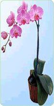 casi todo sobre carácterísticas y cultivo de orquideas