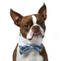 Blue Plaid Dog Bowtie