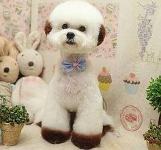 Asian style, Shih tzu and Style on Pinterest