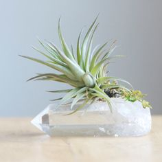 BLACK FRIDAY THROUGH CYBER MONDAY: Use the code MERRY at checkout for 10% off. Every order gets a free gift!! Our classic Air Plant on Quartz Crystal, now in a smaller, more budget friendly size, which makes a nice way to splurge a little bit on yourself or give someone a reminder that you are thinking of them! And while it is small on size, its big on green and growing charm! The crystal on the LEFT is the size in this listing, posed next to our larger size for a comparison. This listing…