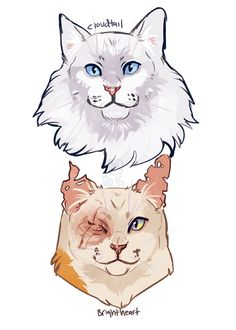 Brightheart and Cloudtail