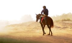 www.horsealot.com, the equestrian social network for riders & horse lovers | Horseracing in the desert by Zuzanna Zajbt.