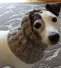Ravelry: Dog Snood or Neck Warmer pattern by Jacqueline Gibb Knitting Patterns For Dogs, Snood Knitting Pattern, Crochet Cowl Free Pattern, Crotchet Patterns, Knitting Projects, Crochet Ideas, Crochet Dog Sweater, Dog Crochet, Dog Snood