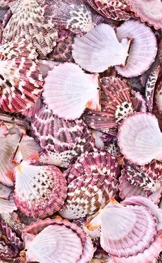 She sells seashells. in pink of course 💕 Phone Backgrounds, Iphone Wallpaper, Natur Wallpaper, Beach Tumblr, Vintage Wallpaper, Trendy Wallpaper, Everything Pink, Pink Aesthetic, Summer Aesthetic