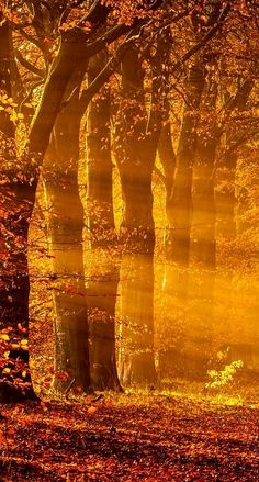 Sun Rays on an autumn morning