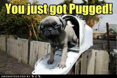 You just got pugged!  LOL