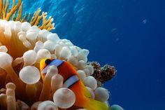 Alla Scoperta della Vita subacquea del Sudan!