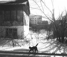 A Photographer Documents The Secret World Of Stray Cats Of Kazakhstan