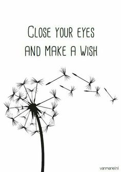Dandelion w/ sèeds, close your eyes and make a wish