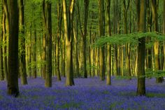 Bluebells in Sunlight - Wall Mural & Photo Wallpaper - Photowall