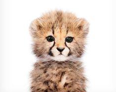 Baby cheetah print, Safari nursery art, Baby animal wall art, The Crown Prints, Nursery wall decor, Baby room prints, Nursery art prints