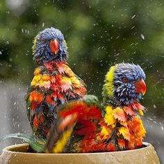 Feather Art, Bird Feathers, Animal Pictures, Owl, Rainbows, Creative, Instagram Posts, Animals, Blog