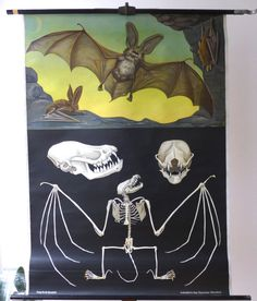 Vintage Bat School Chart Large Bats and by Discoverprints on Etsy, $150.00