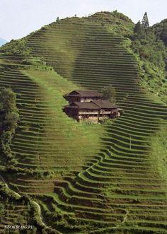 Mountain Farm in Japan