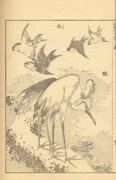 Hokusai Manga Art Occidental, Japanese Bird, Japanese Drawings, Katsushika Hokusai, Irezumi, Chinese Culture, Ink Painting, Woodblock Print, Bird Art