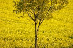 Ich sehe Gelb! #EDS