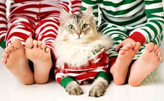 16 Creative Ideas for Putting Pets in Your Holiday Photos via Brit + Co