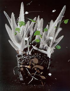 Cactuses_III.jpg (364×473)