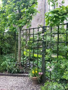 Beautiful garden in Amsterdam. Dark grid fencing
