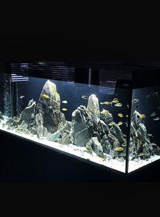 Cichlid Aquarium, Aquarium Fish Tank, Aquarium Cabinet, Fish Aquarium Decorations, Fish Tank Design, Aquarium Landscape, Aquarium Design, Pet Fish, African Cichlids