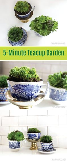 Teacup Gardens Minute Miniature Container Garden These easy miniature teacup gardens are a fun way to bring your love of gardening indoors. Inside Plants, Small Plants, Indoor Plants, Potted Plants, Teacup Plants, Teacup Flowers, Hydroponic Gardening, Gardening Tips, Indoor Gardening