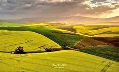 Canola fields in the Overberg region of the Western Cape Province, South Africa. Canola Field, Place To Shoot, Cape Town, South Africa, Fields, Westerns, Golf Courses, Adventure, Places