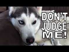 Cachorro que ama meias em vídeo de rock heavy metal!
