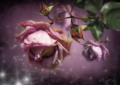 by Svetlana Sewell