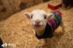 Precious--(Meet the New Lambs of Edgar's Mission, the Cutest Rag-Tag Team You've Ever Seen) (PHOTOS)